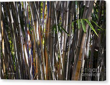 The Sun Through Bamboo Canvas Print by Sally Simon