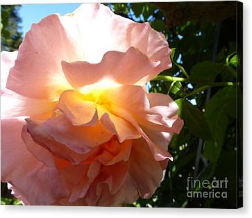The Sun Within Canvas Print by Anat Gerards