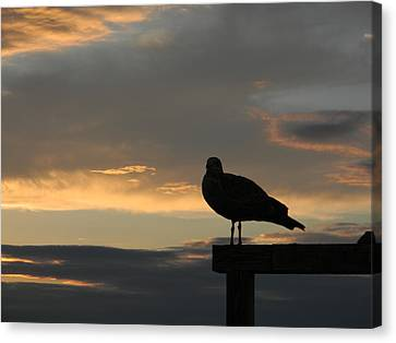 Canvas Print featuring the photograph The Sunset Perch by Jean Goodwin Brooks