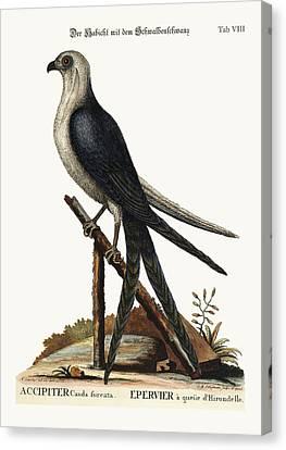 The Swallow-tail Hawk Canvas Print by Splendid Art Prints