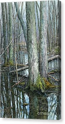The Swamp 3 Canvas Print