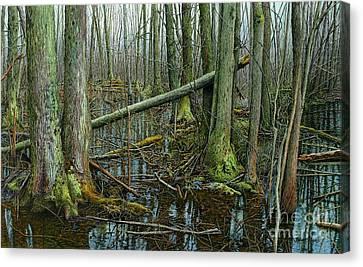 The Swamp 4 Canvas Print