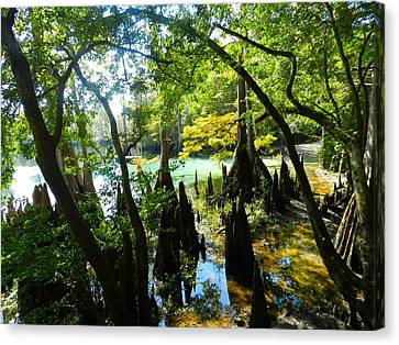 The Swamp By The Springs Canvas Print by Julie Dant