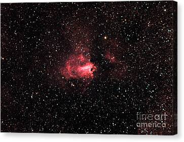 The Swanomega Nebula Canvas Print by John Chumack