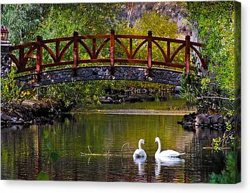 Canvas Print featuring the photograph The Swans At Caughlin Ranch by Janis Knight