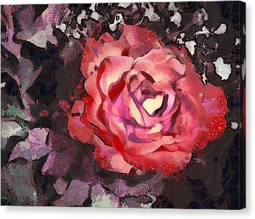 Flower Blooms Canvas Print - The Sweetest Rose 3 by Angelina Vick
