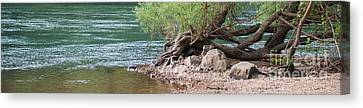 The Tangled Tree Canvas Print by Julie Clements