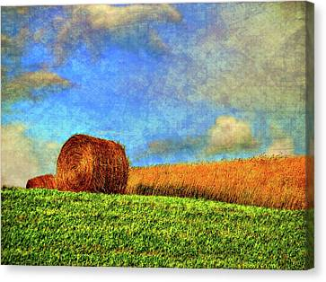 The Textures Of Autumn Canvas Print by Steve Harrington