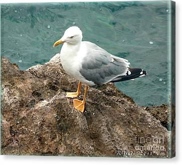 The Thinker - Seagull Photography By Giada Rossi Canvas Print by Giada Rossi