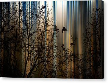 The Thorn Birds Canvas Print by Marek Czaja