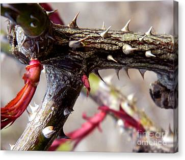 The Thorns Of Life Canvas Print by Andrea Anderegg