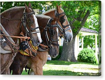 Canvas Print featuring the photograph The Three Amigos by Cathy Shiflett