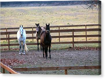 The Three Amigos Canvas Print by Rhonda Humphreys
