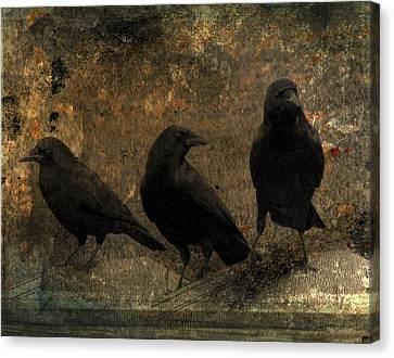 The Three Black Crows Canvas Print by Gothicrow Images