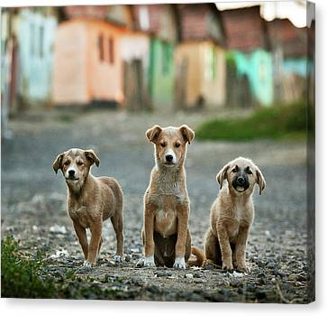 Romania Canvas Print - The Three Musketeers by Sorin Onisor