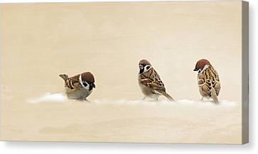 The Three Sparrows Canvas Print