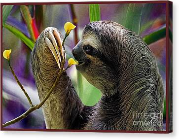 Brown-throated Three-toed Sloth Canvas Print - The Three-toed Sloth by Gary Keesler