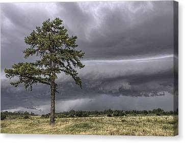 Canvas Print featuring the photograph The Thunder Rolls - Storm - Pine Tree by Jason Politte