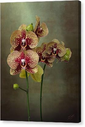 Timeless Orchid Canvas Print by Matthew Schwartz