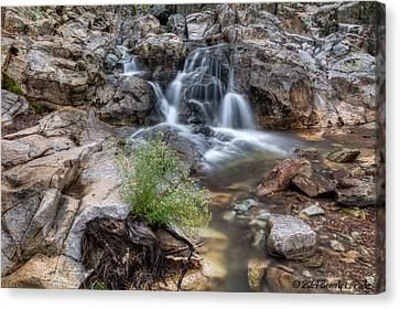 Canvas Print featuring the photograph The Top Of Carr Canyon Falls by Beverly Parks