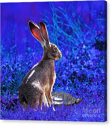 The Tortoise And The Hare . Blue Square Canvas Print by Wingsdomain Art and Photography