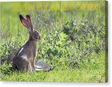 The Tortoise And The Hare Dont Put All Your Eggs In One Basket 40d12379 Canvas Print by Wingsdomain Art and Photography