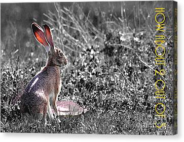 The Tortoise And The Hare How About Two Out Of Three 40d12379 Black And White Canvas Print by Wingsdomain Art and Photography