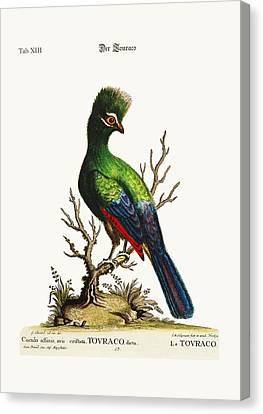 The Touraco Canvas Print by Splendid Art Prints