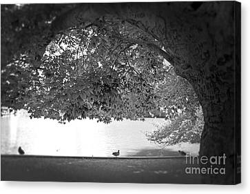 The Tree At Mill Pond Canvas Print