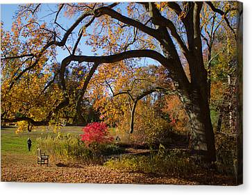 Canvas Print featuring the photograph The Tree Embrace by Jose Oquendo