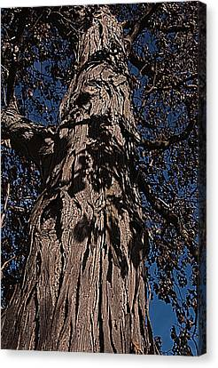 Canvas Print featuring the photograph The Tree Of Life by Deborah Klubertanz