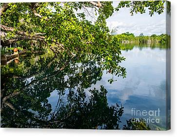 The Tree On The Cenote Canvas Print