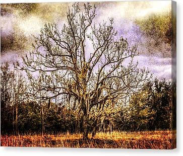 The Tree Canvas Print by Steven  Taylor