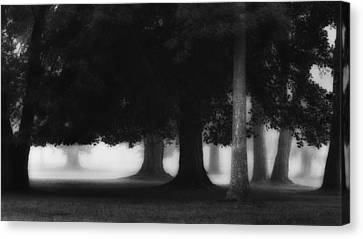 Litchfield County Canvas Print - The Trees by Bill Wakeley