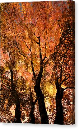 The Trees Dance As The Sun Smiles Canvas Print by Don Schwartz