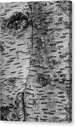 Beauty Mark Canvas Print - The Trees Have Eyes by Heidi Smith