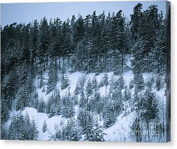 The Trees Of The Snowy Hill Canvas Print