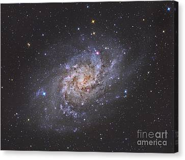 The Triangulum Galaxy Canvas Print by Reinhold Wittich