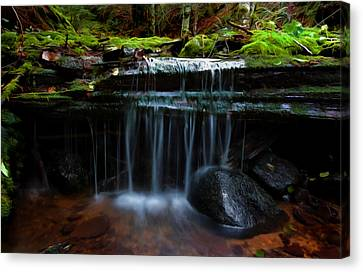 The Trickling Brook Canvas Print by Timothy Hack