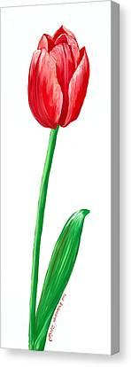 The Tulip Canvas Print by Kate Holloman