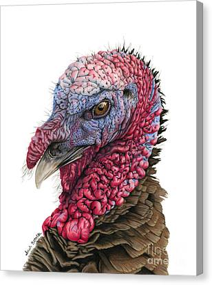 North American Wildlife Canvas Print - The Turkey by Sarah Batalka