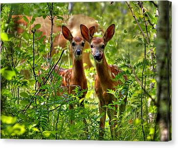 The Twins Canvas Print by Larry Trupp