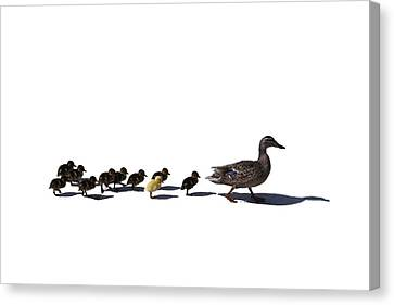 Canvas Print featuring the photograph The Ugly Duckling  by Lars Lentz