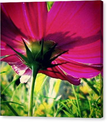 Canvas Print featuring the photograph The Under Side Of Life by Thomasina Durkay