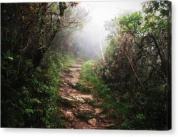 Light The Path Canvas Print