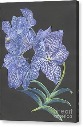 The Vanda Orchid Canvas Print by Carol Wisniewski