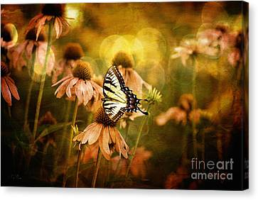 Cone Flower Canvas Print - The Very Young At Heart by Lois Bryan