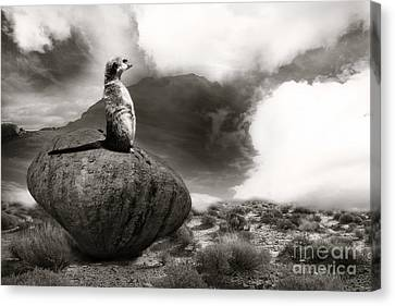 Canvas Print featuring the photograph The View by Christine Sponchia