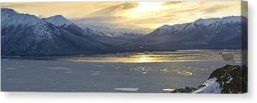 The View Of A Dall Sheep Canvas Print by Tim Grams