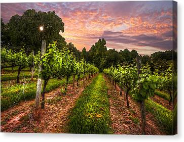 The Vineyard At Sunset Canvas Print by Debra and Dave Vanderlaan